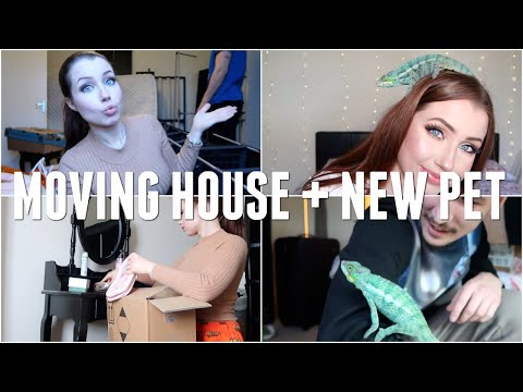 Moving Into A New Home & Buying A Pet Chameleon (aka.. the most stressful week of my life)