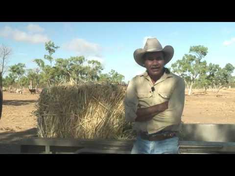 KIMSS: Kimberley Cattlemen Part 1