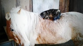 Farm Animals 😂🐎 Funny Animals In the Farm (Part 2) [Funny Pets]