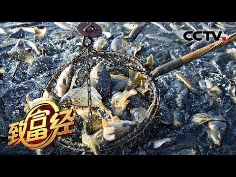 《致富经》 鬼门关里抓出黄金财 南麂岛上的老人与海 20190808 | CCTV农业
