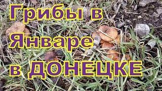 Тропики в Донецке.  118