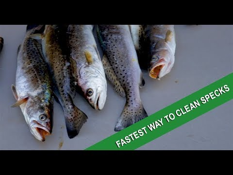 The absolute best way to fillet speckled trout