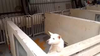 Death Row Dog REALLY Wants a Family - CUTE