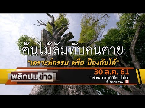 ต้นไม้ล้มทับคนตาย เคราะห์กรรมหรือป้องกันได้ - วันที่ 30 Aug 2018
