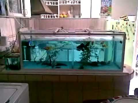 acuario litros goldfish gigantesmp