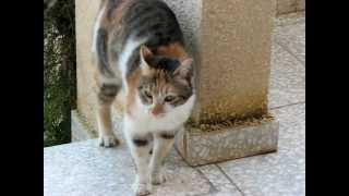 Кошка метит терреторию