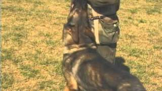 The Foundations Of Competitive Working Dogs Obedience 2- Teaching Precision (deutsch)
