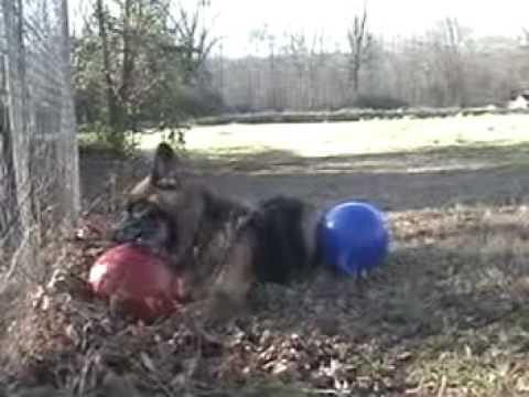 jolly-ball---jolly-ball-dog-toys---german-shepherd-dog-toys