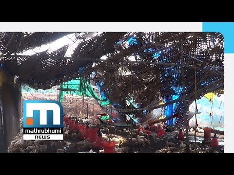Poultry, Goat Farm Collapses In Rain, Expat Shattered| Mathrubhumi News
