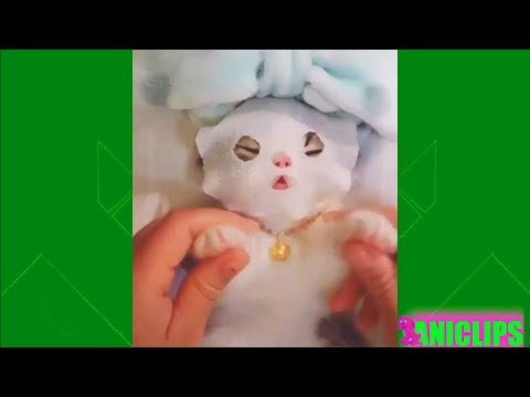 Cats Doing Funny & Cute Things 2018 🐱 Funny Cat Vines Compilation #3