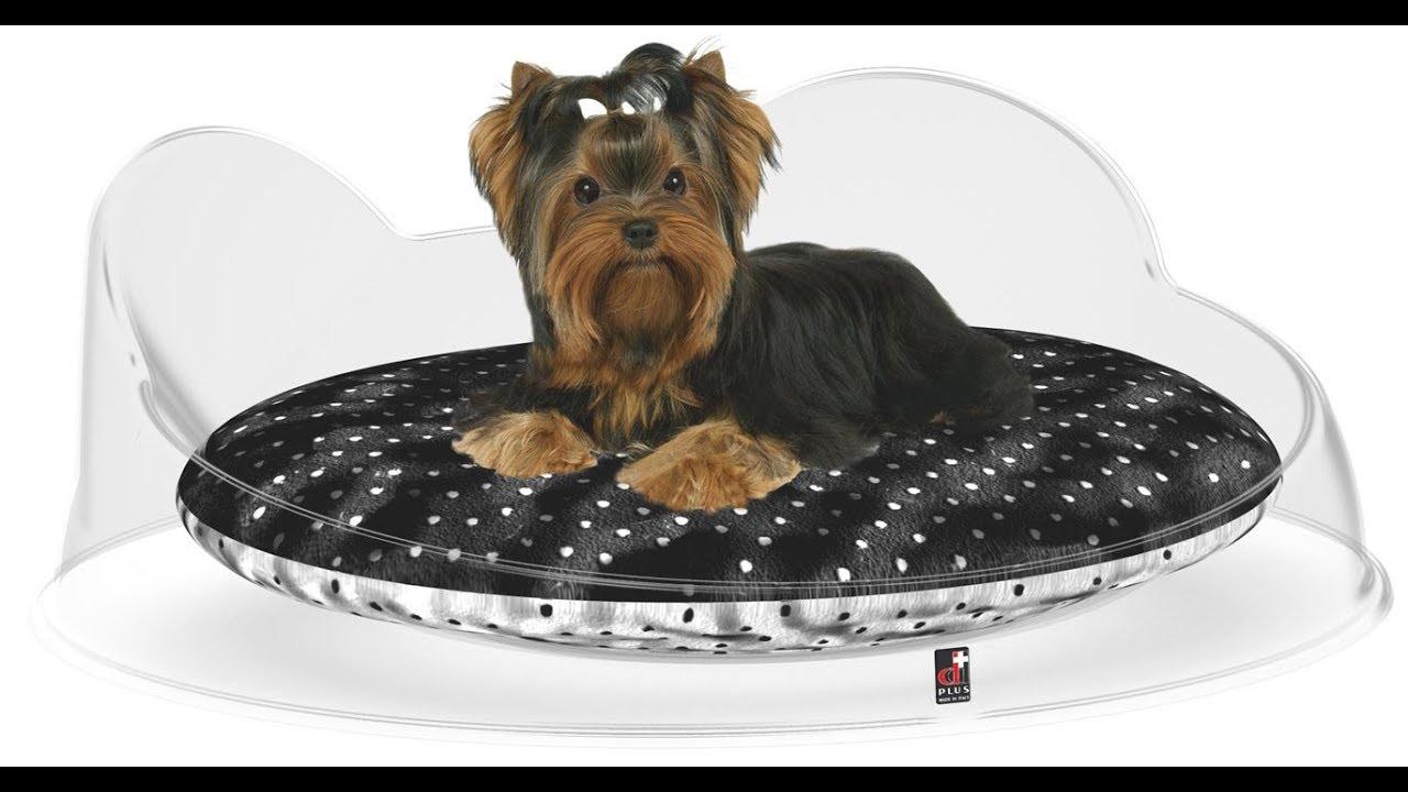 Cucce Design Per Cani cucce luxury per cani da interno | lettini design per cani piccoli | ddplus  pet