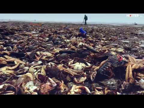 Death of tens of thousand marine animals in UK: shocking truth about this disaster!