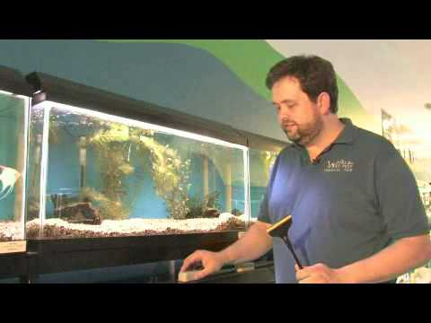 How To Clean Algae From An Aquarium