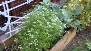 Veggie Garden Tour