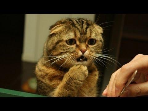 Słodkie Koty Czują Się Zagubieni - Zabawny Kot Kompilacja