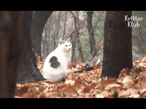 Cat Can't Accept The Reality Of Being Abandoned | Kritter Klub