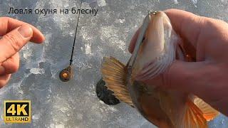 Ловля окуня на зимнюю блесну Озеро Ильмень Б Аркадский залив 09 01 2021