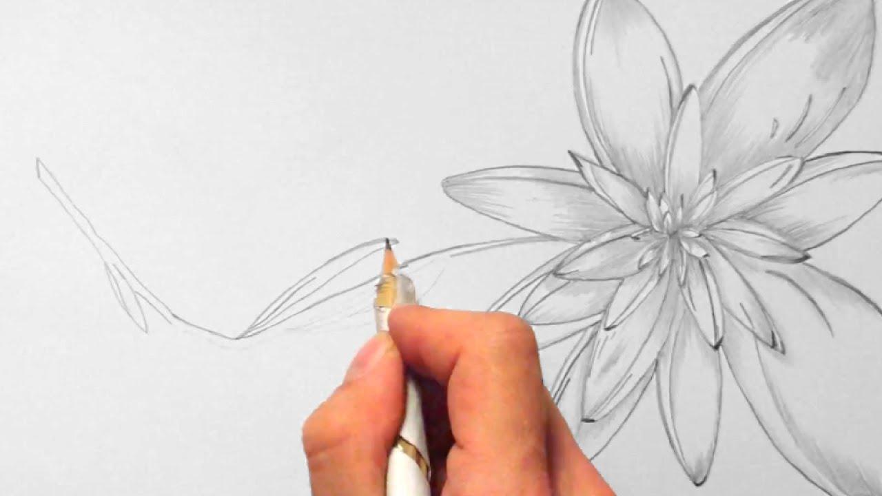 Blume zeichnen im Zeitraffer 02 Flower drawing in fast