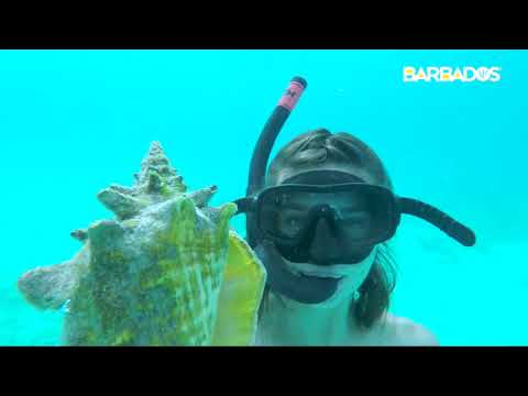 Brilliant Barbados Adventure