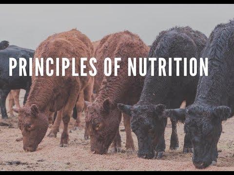 Practical Feedlot Seminar: Principles Of Nutrition