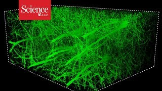 Snippet: Mesmerizing images of the fly brain captured at record speed