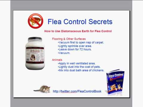 Dichotomous earth fleas
