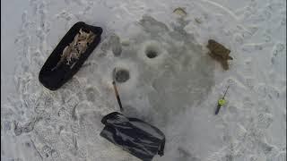 Зимняя рыбалка на Чанах Больше было крупного окуня
