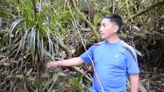 Refugio del Bosque Medicinal - buscando apoyo