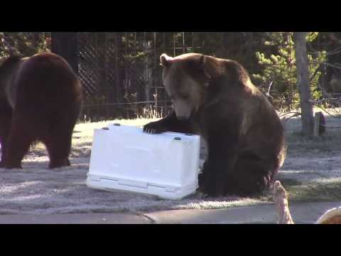 Cascade Mountain Tech Super Cooler Bear-Resistant Certification