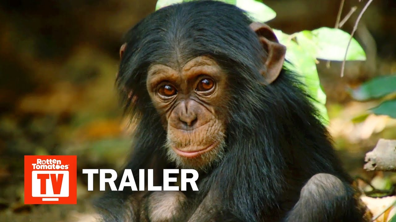 Download Dynasties Season 1 Trailer | Rotten Tomatoes TV