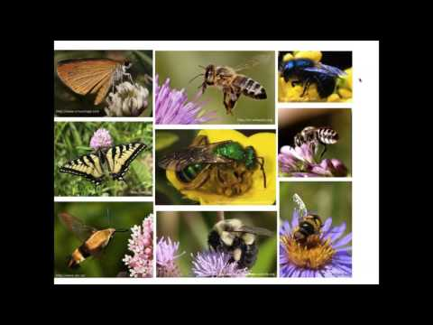 Pollination in the Prairies