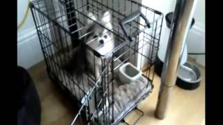 ►Potty Training Older Puppies Potty Training Your Puppy