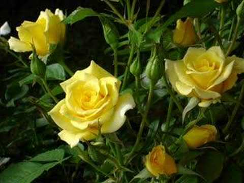 Bobby Darin and Marty Robbins '18 Yellow Roses.'