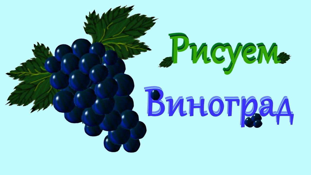 Как поэтапно рисовать гроздь винограда