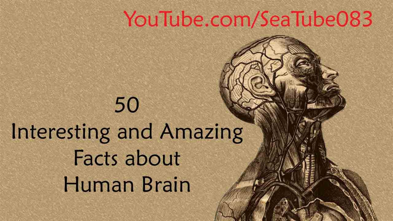 50 Interesting and Amazing Facts About Human Brain - YouTube