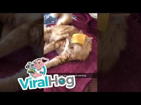 The KiddChris Show - Slice of Cheese Stuns Cat