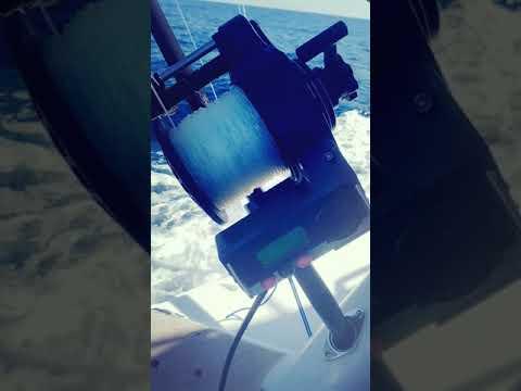 Squidnation Dredge Test