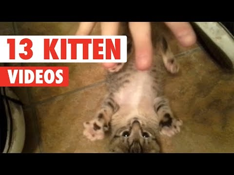 Funny Kittens | Funny Cat Video Compilation 2017