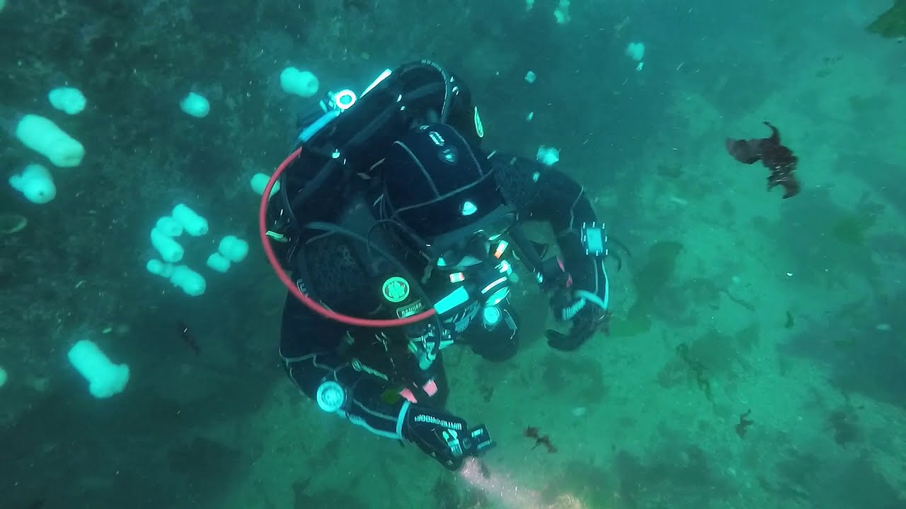 SCUBA Diving Edmonds Underwater Park ! SCUBA Diving Puget Sound, Washington State - Fish Everywhere!