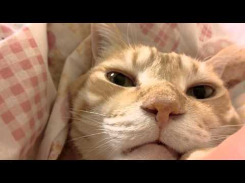 冬だけおふとんに入ってくる猫
