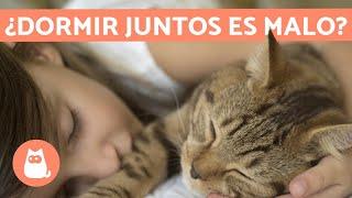 ¿Es malo DORMIR con gatos?  ¡TE LO EXPLICAMOS!