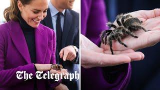 video: Fearless Duchess of Cambridge tangles with tarantula on Northern Ireland visit