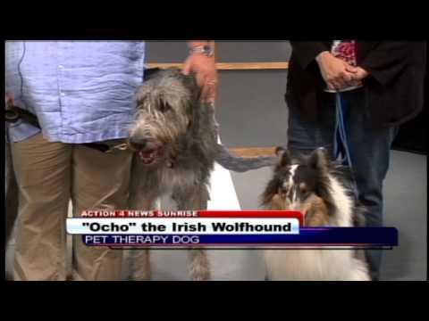 ocho-the-dog