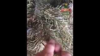 видео Где купить Дасткую елку