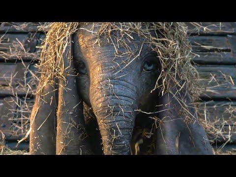 Finding Baby Dumbo In The Hay Scene - DUMBO (2019) Movie Clip