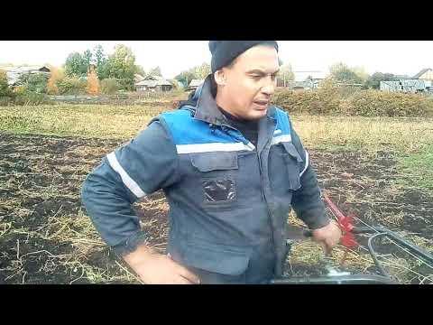 видео: Выращивание картошки от А до Я.Финал.Оценка урожая.