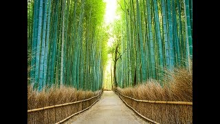 vuclip The most beautiful places in Japan