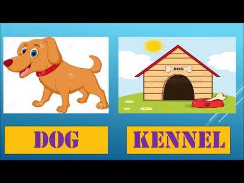 Animal and their homes
