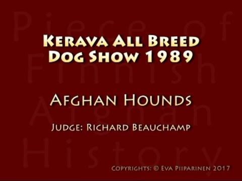 Kerava All Breed Dog Show 4.6.1989 ♥ Afghan Hounds