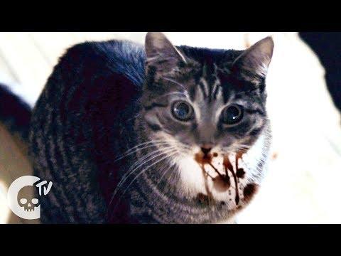 Meow | Short Horror Film | Crypt TV